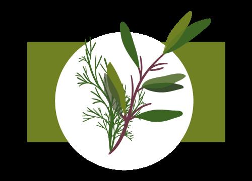 Kräuter und Gewürze von Gemüsehof Schneider