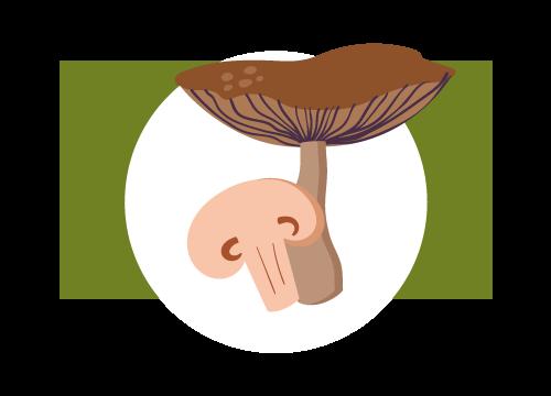 Pilzesorten von Gemüsehof Schneider